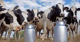 هيئة الاستثمار السورية تدعم الإنتاج الحيواني،